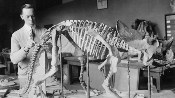 Norman Ross prepares the fossil of a young dinosaur, about seven or eight million years old, for exhibition in 1921.