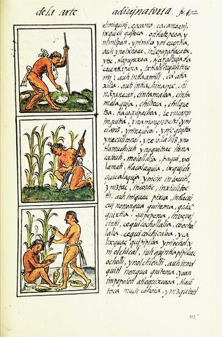 Representation of agriculture. Gary Francisco Keller, artwork created under supervision of Bernardino de Sahagún between 1540 and 1585. - The Digital Edition of the Florentine Codex. CC BY 3.0